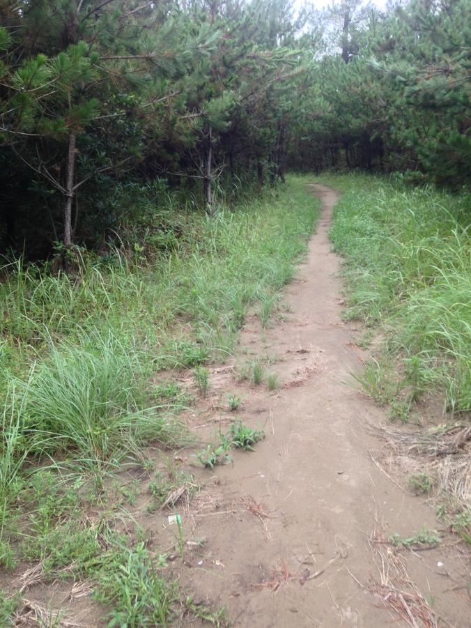 Totally a path.